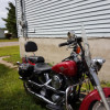 Beautifull Harley for sale